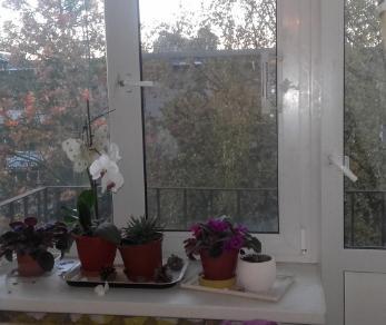 Продажа квартиры Петергоф, Халтурина ул.