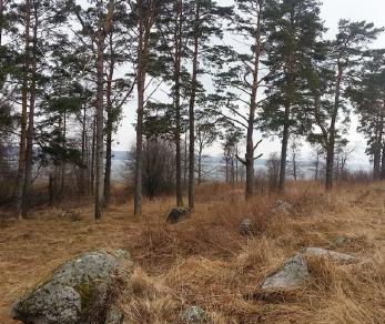 Коттеджный поселок Соловьёвские дачи