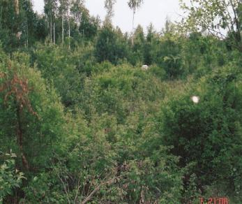 Продажа участка Борисова Грива