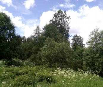 Продажа участка Синево