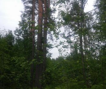 Продажа участка Никитилово дер., Никитилово деревня