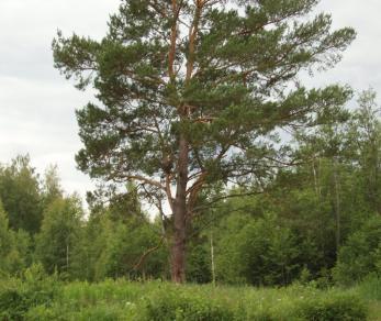 Продажа участка Соловьево
