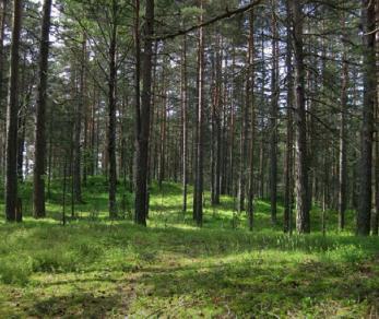 Коттеджный поселок Балтийская Ривьера