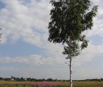 Продажа участка деревня Велигонты, Велигонты