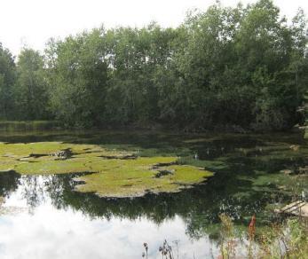 Коттеджный поселок Три ручья