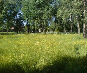 Продажа квартиры Кудрово, Центральная ул.