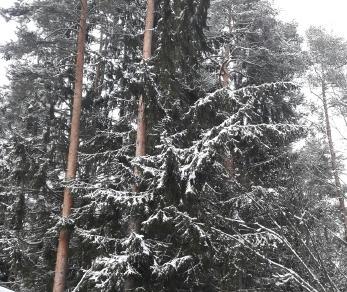 Продажа дома Вырица, Комарова ул.