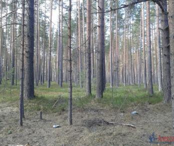 Продажа участка Моторное, Приозерское ш.