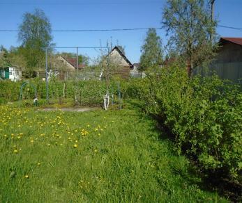Продажа участка Беляевский мох, 30-я линия, д. 664