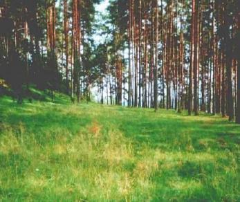 Коттеджный поселок Тюнев Посад