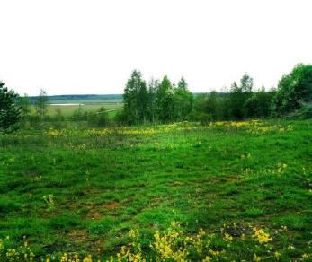 Продажа участка Запорожское