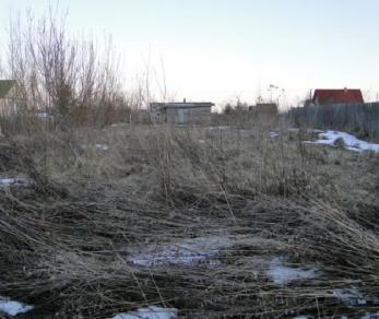 Продажа участка Антропшино массив, Славянка СНТ